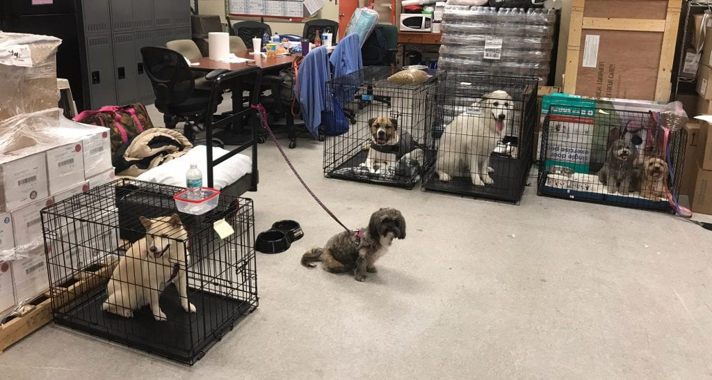 Dogs in material management